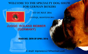 boxer dog 2016 calendar specialty dog show for german boxers 01 05 2016 cetinje