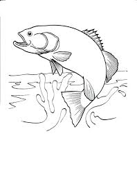 coloring pages fish color pages printable fish coloring pages