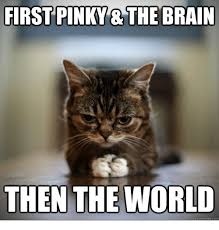 Pinky And The Brain Meme - first pinky the brain then the world quickmemecom meme on me me