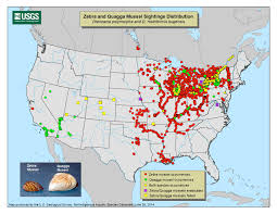 Canada And Us Map by Zebra Mussels On March In Lake Winnipeg Canadian Consulting Engineer