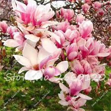 get cheap ornament tree diy aliexpress alibaba
