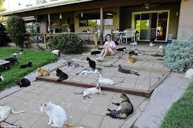 outdoor house funny cool pictures cat house