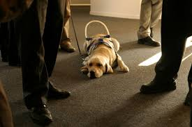 Leader Dogs For The Blind Jobs The 10 Biggest Misconceptions About Guide Dogs For The Blind
