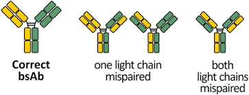 heavy chain light chain novel ch1 cl interfaces that enhance correct light chain pairing in
