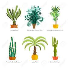 indoor plants images vector set of indoor plants in pots illustration of floor trees