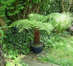 Fern Rock Garden Apartments 21 Best Ferns For Containers That You Can Grow Indoors Outdoors