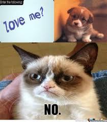 Grumpy Cat No Meme - grumpy cat no just no meme
