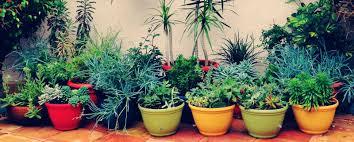 daily gardening tips u2013 indoor and outdoor tips