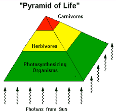 life on earth flow of energy and entropy