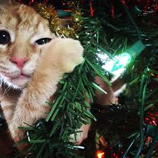 Cat Climbing Christmas Tree Video Last Year A Burglar Stole Our Presents And Jacked Up Our Tree