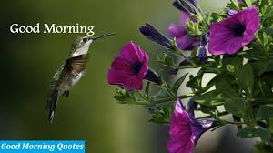 Flower And Bird - morning images morning pictures collection