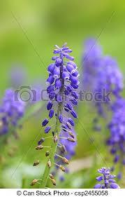 delphinium flowers delphinium flowers up of purple colored