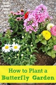 top 30 plants that attract bees butterflies and hummingbirds