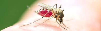 moucheron cuisine cuisine photos anti s tout produit moucheron moustique pour maison