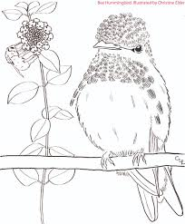caribbean birds coloring book