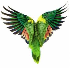 parrots in paradise kealakekua hawaii exotic bird 79 best tropical paradise images on pinterest tropical paradise