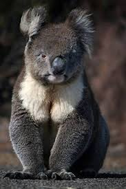bartender resume template australia zoo expeditions maui to molokai 172 best mammals images on pinterest animals wild animals and