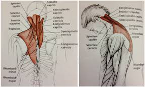 Neck To Shoulder - stretch sequence to relieve tension in the neck shoulders