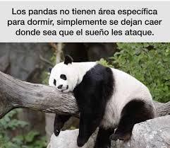 dopl3r com memes los pandas no tienen área específica para