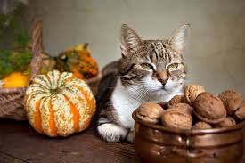 7 things my cats are thankful for this year catster