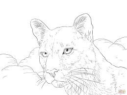 cougar portrait coloring page free printable coloring pages