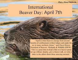 martinezbeavers org blog archive happy international beaver day