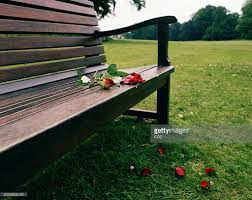 red rose and petals on park bench stock photo getty images