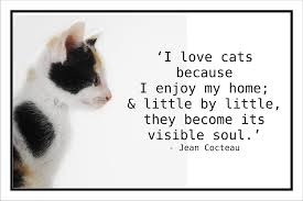 Awesome Quotes About Cats Being - quotes about cats delectable best 25 cat love quotes ideas on