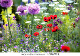 english garden stock images royalty free images u0026 vectors