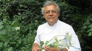 la cuisine des plantes sauvages antony cuisine les plantes sauvages dans resto