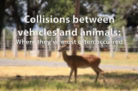 Texas Wild Animals images Here 39 s where people most often crash into wild animals while jpg