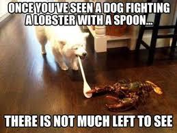 Benson Dog Meme - dog meme properly ridiculous