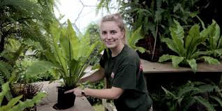 common houseplant could hold the key to restoring life in oil palm