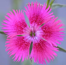 pictures of all flowers in the world best flower in the word 2017