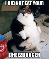 Cheezburger Meme Creator - i did not eat your cheezburger extra fat cat meme generator