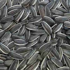 sunflower seeds raw sunflower seeds manufacturers argentina