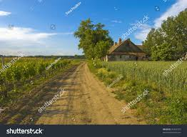 small country houses small country house corn fields beside stock photo 37423723