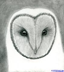 9 how to draw an owl head masked owl
