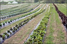 vegetable garden weed control gardening ideas