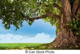 big tree images and stock photos 71 745 big tree photography and