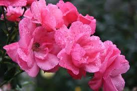 all america selections uri botanical gardens blog