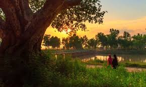 native plants of pakistan chenab pakistan u0027s river of love blogs dawn com