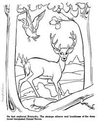 realistic animal coloring pages printable 48 realistic animal coloring pages 3629 free coloring