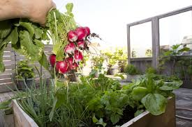 Vegetable Garden Containers by What Vegetables Can You Grow In Containers