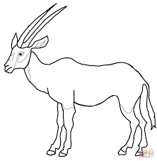 arabian oryx coloring page free printable coloring pages