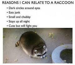 Raccoon Meme - funny raccoon meme tumblr