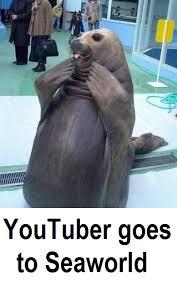 Walrus Meme - walrus meme tumblr