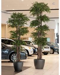 14 commercial sized artificial ming aralia trees at