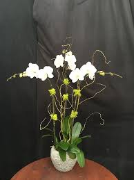 orchid arrangements orchids orchid arrangements florida