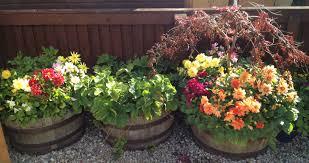 barrel planters carrick cooperage